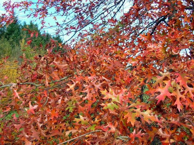 feuillages d'automne 3