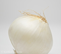 White Onion Still Life High Key 040114