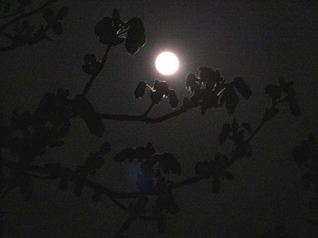 Frühlingsmond  2009 04-10