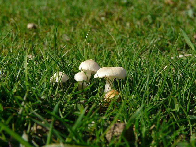 Tiny Fungi Family