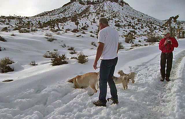 Nevada Snow (3496)