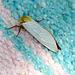 Ghost Moth Top