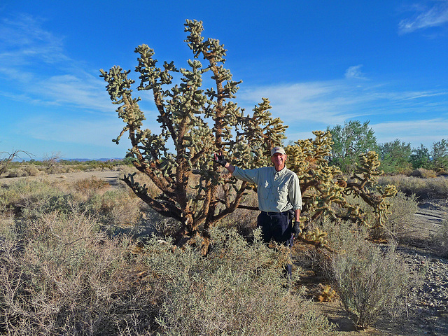Big Cholla (2275)