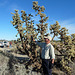 Big Cholla (2276)
