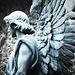 Hope of an angel / Esperanza de un ángel