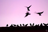 Freedom of flying / Libertad de volar