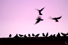 Freedom of flying / Libertad de volar