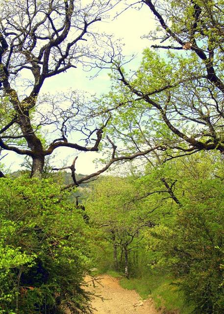 petit chemin dans les bosquets