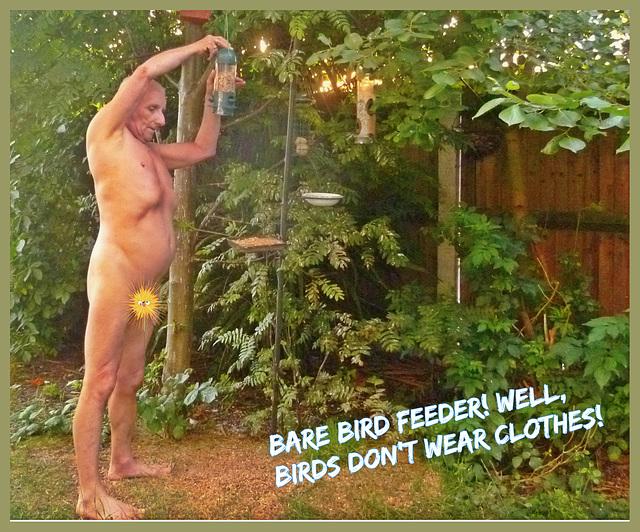 Bird Feeder Sunny