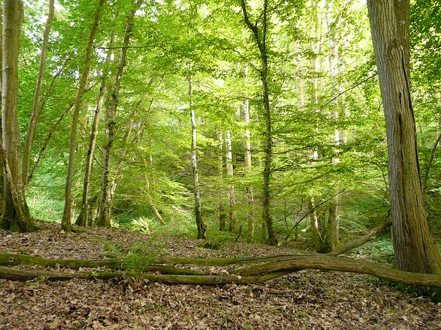 Brede High Wood