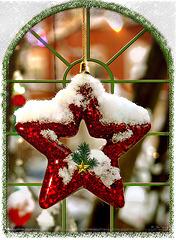 Weihnachtsstern*