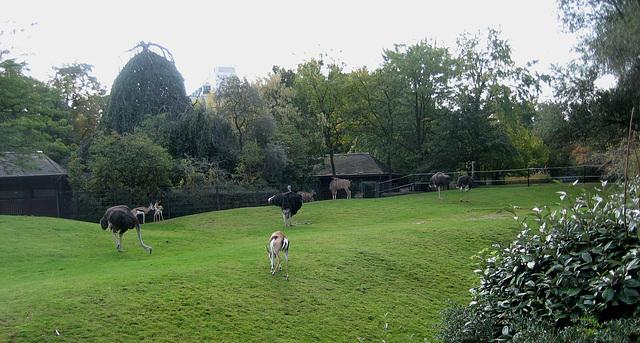 Berlin, Zoologischer Garten (6)