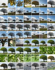 Mein Baum-Album