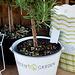 Verda ĝardeno - Grüner Garten
