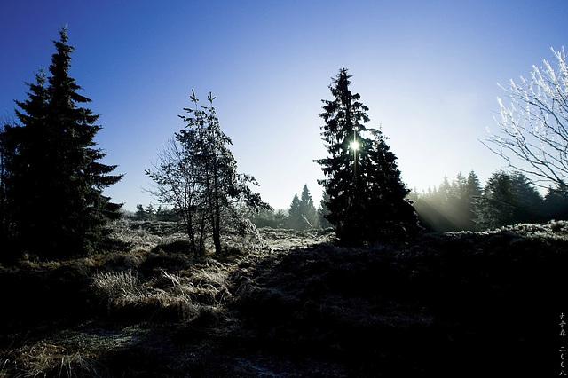 Winter - Teaser 2
