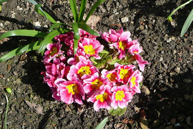 Endlich - Frühling 2009