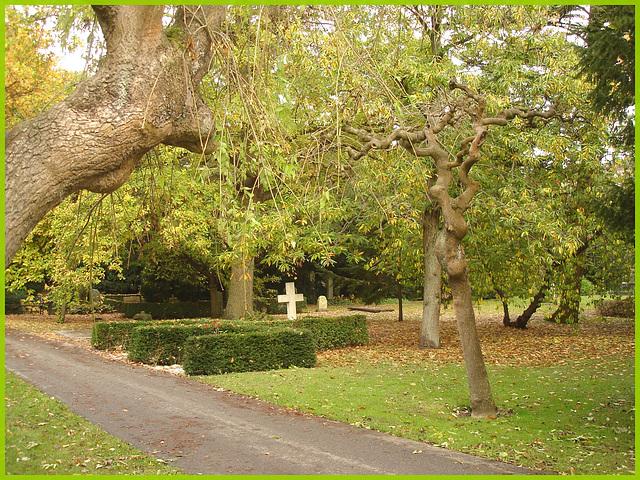 Arbre maléfique- Evil tree.  Cimetière de Copenhague- Copenhagen cemetery- 20 octobre 2008