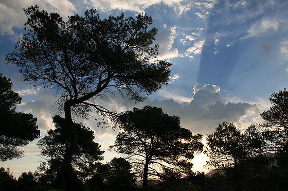 Arbres et nuages