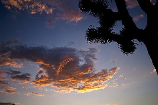 dreaming beneath the desert sky