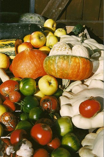 tomates, citrouilles et coloquintes
