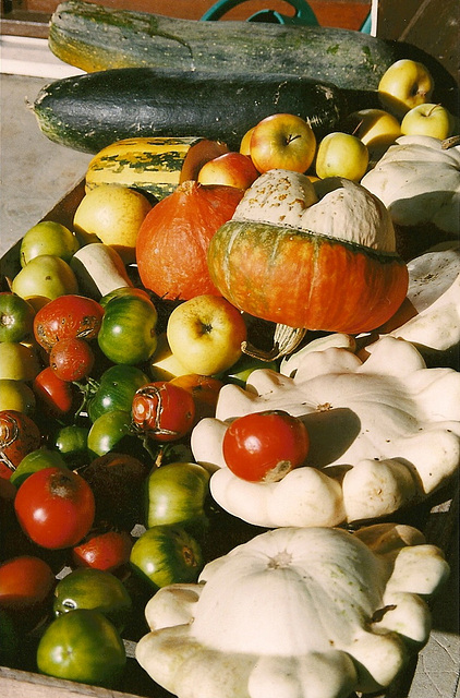 coloquintes, cucurbitacées et tomates