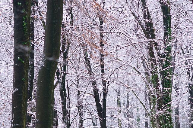 Trees // 2