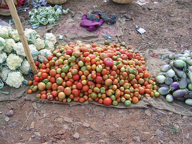 monceau de tomates