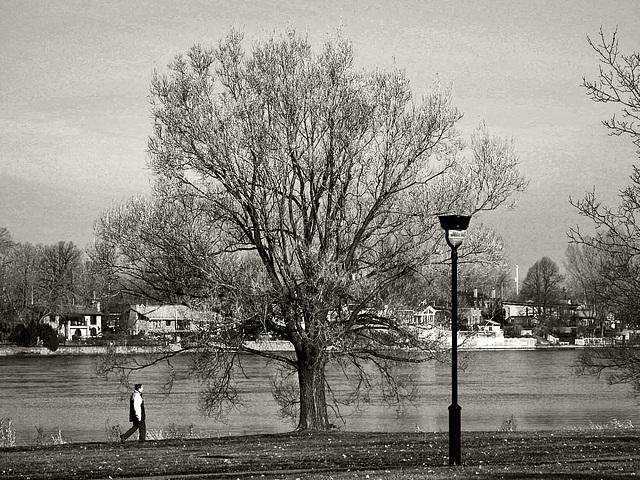 El Hombre, El árbol, Y el Farol.