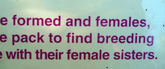 Living Desert 'Female Sisters' (2100)