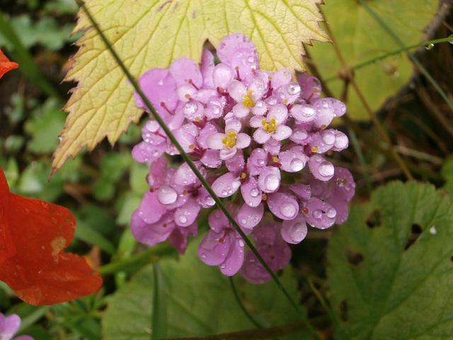 Like these multi-headed flowers