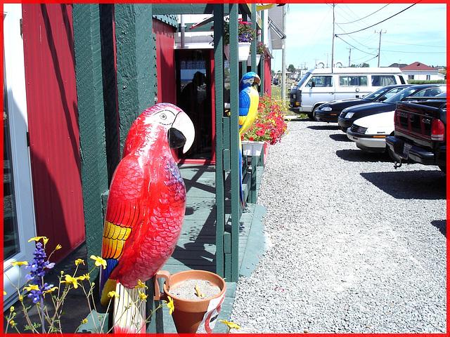 Perroquets  / Parrots of /du bas du fleuve - Resto la rose des vents - Pointe-au-père,  Québec.  CANADA. 23 juillet 2005.