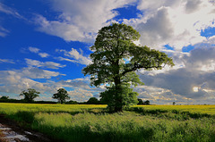 Staffordshire fields