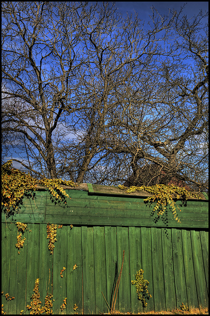 the green fence
