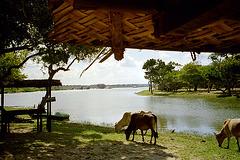 Laguno ĉe nia hotelo en la Yala Nacia Parko en la ekstrema sudo de la insulo ĉe Hinda Oceano