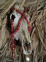 Skull (1620)