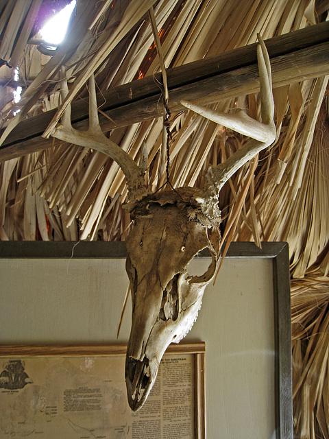 Skull (1625)