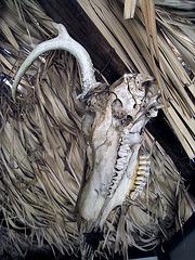 Skull (1626)