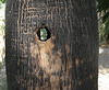 Woodpecker Hole (1568)
