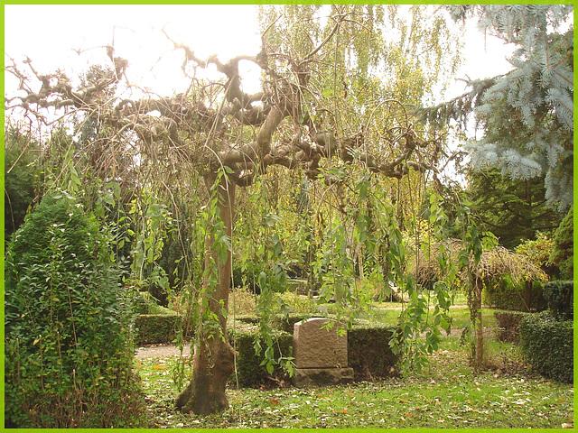 Cimetière de Copenhague - Copenhagen cemetery- 20 octobre 2008 / Arbre maléfique - Evil tree.