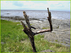 Branches lance-pierres et mer  / Slingshots branch and surf - Québec, CANADA / 22 juillet 2005.