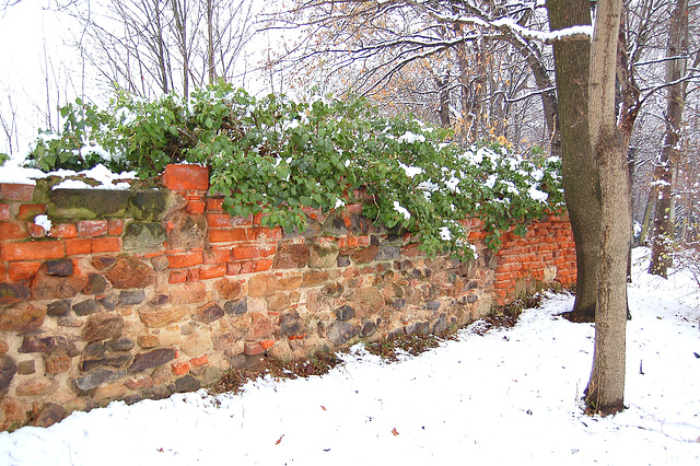 Muro en neĝo III