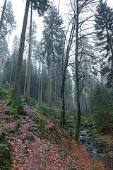 Hermannsweg // Talweg 1