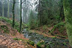 Hermannsweg // Talweg 2