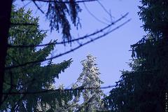 Hermannsweg // Sunny Treetop