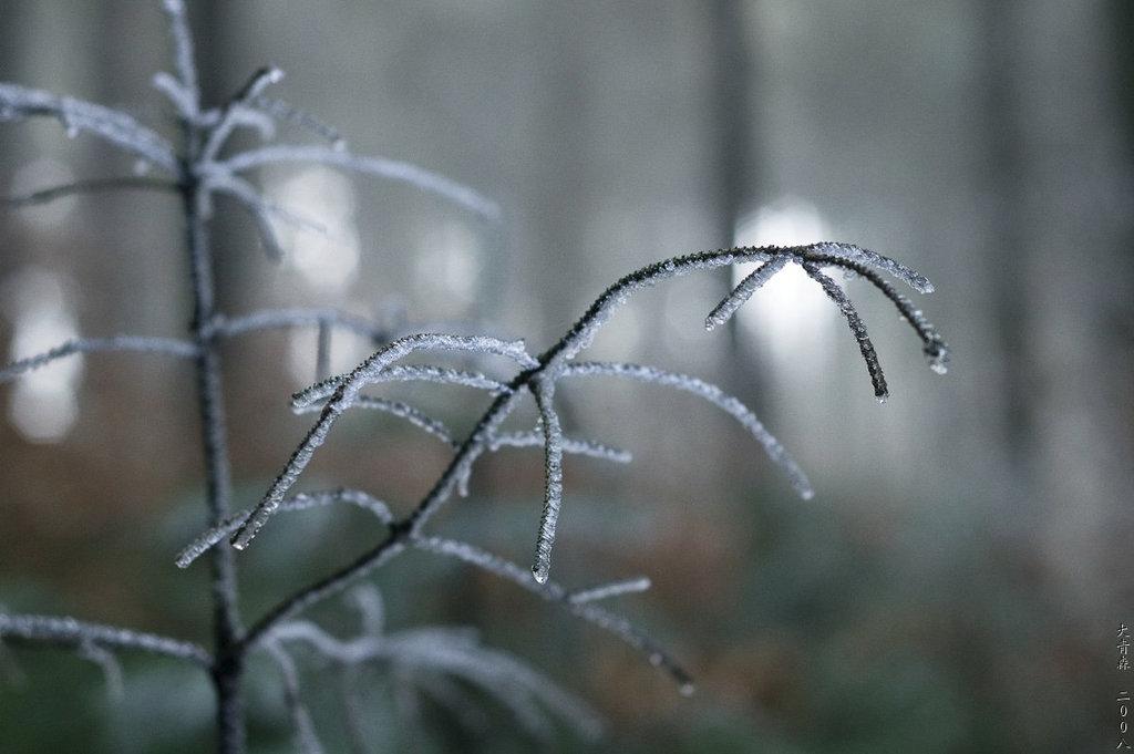Hermannsweg // Icy