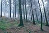 Hermannsweg // More Trees