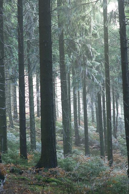 Hermannsweg // Trees