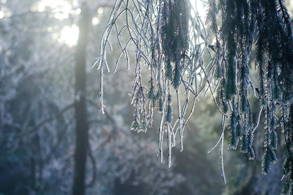 Hermannsweg // Frost