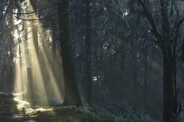 Hermannsweg // Licht ist alles 5