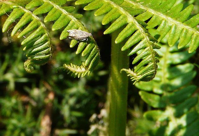 Tiny Moth